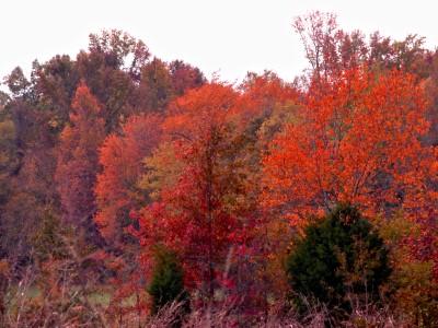Tennessee Autumn #1