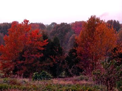 Tennessee Autumn #3